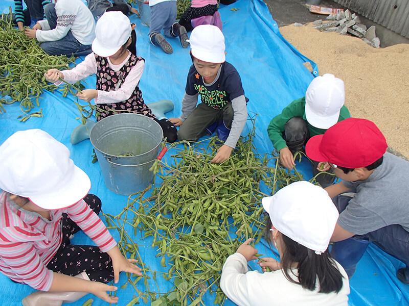 地元の学校では種まきから収穫まで通して子どもたちに鴨川七里を伝えている