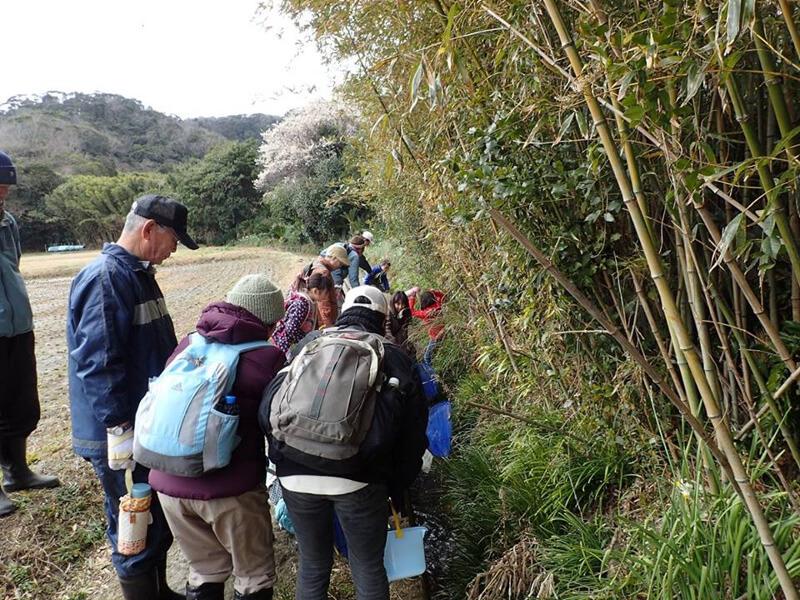 エコ田舎体験・香(こうやつ)散歩        写真提供:NPO法人たてやま・海辺の鑑定団